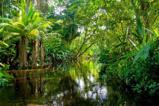 Amazon Rainforest 3 Day Tour1 - 7 Best Things To Do In Brazil